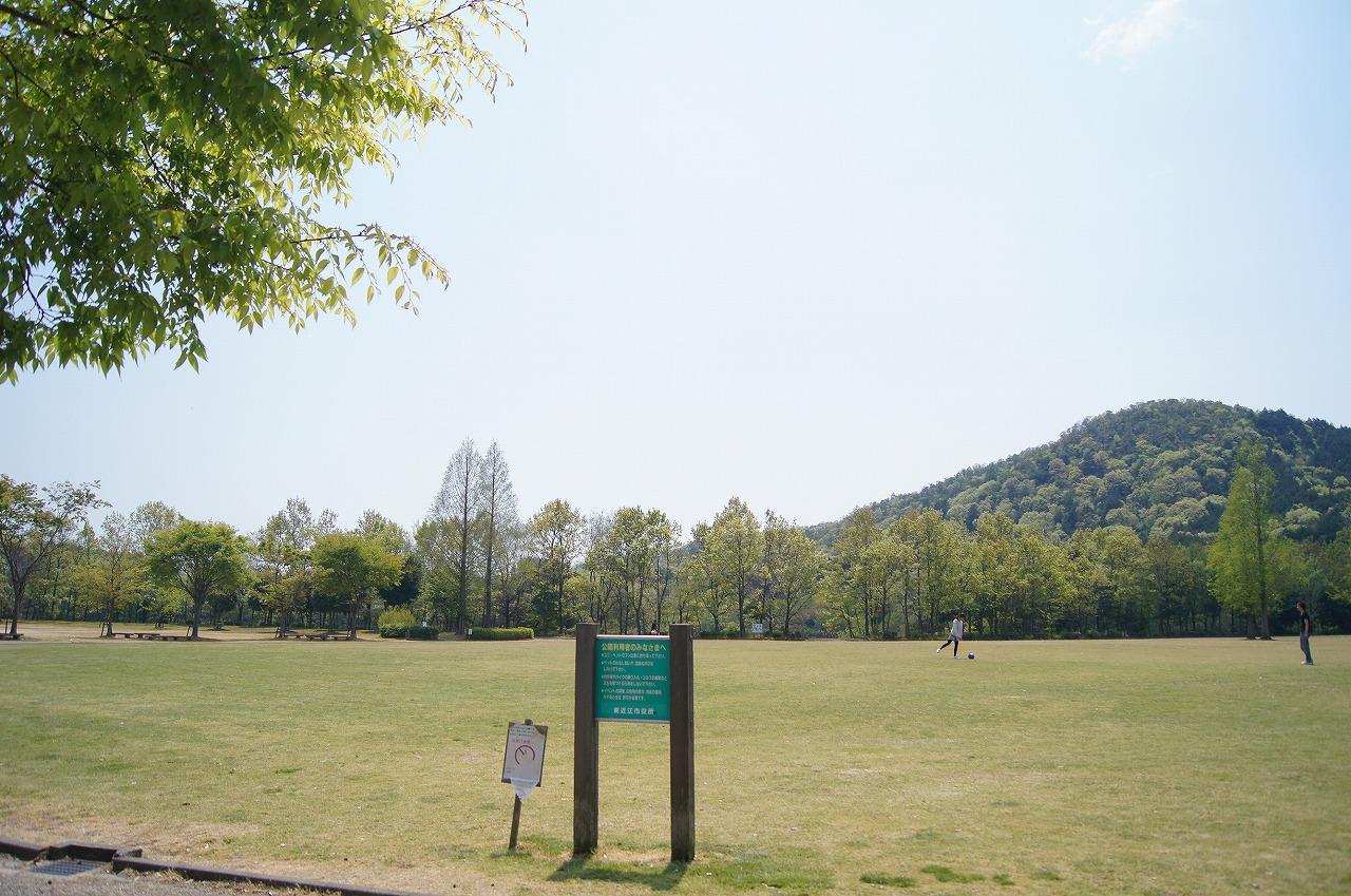 大きめの草原