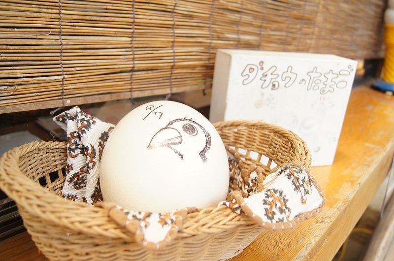 ダチョウの卵って見たことありますか